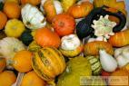 Recept Pikantní dýňový kompot s ananasem - Tykev obecná, nebo - li Dýně obecná