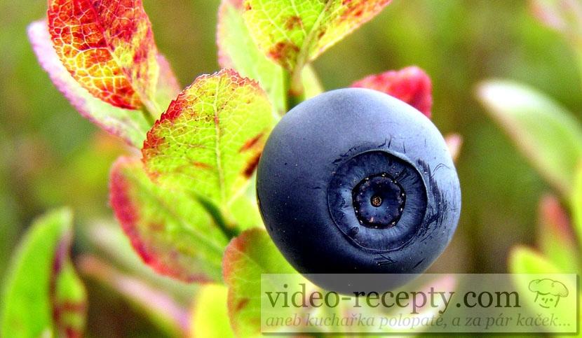 Borůvka - plod